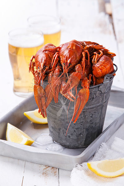 Red lobsters with beer on white background