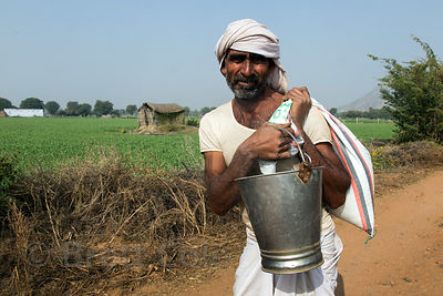 Laborer on a farm growing peas, wheat, and carrots walks home for the day, Nand village, Rajasthan, India