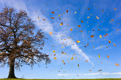 Autumn leaves flying in rural field