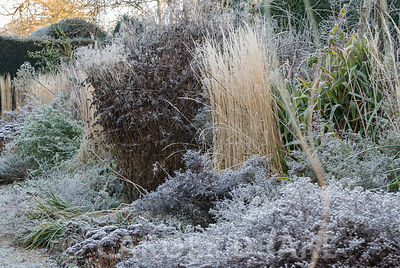 Double herbaceous borders on a frosty morning with strong verticals of Calamagrostis 'Karl Foerster' showing a warm buff. Kin...
