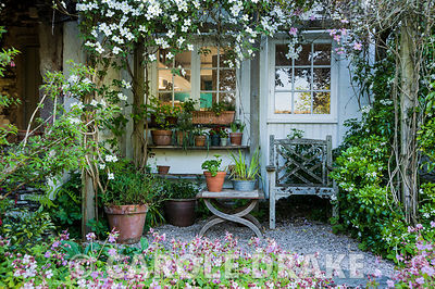 A sheltered seating area against the house shrouded with pink and white Clematis montana, and framed with Choisya ternata, ha...