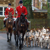 The Cottesmore Hunt at The Fox & Hounds, Knossington 22/11