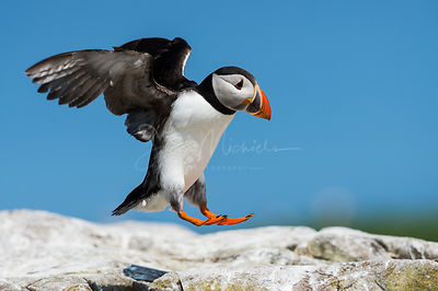 Farne Islands 2013 photos