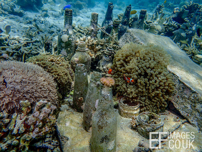 Check out the difference between the sea floor in this picture and the sea floor in the last picture! Here the effect of Bott...