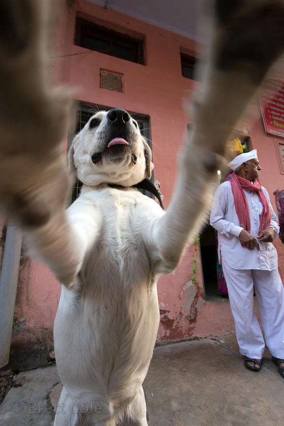 Street dog in Haridwar, India