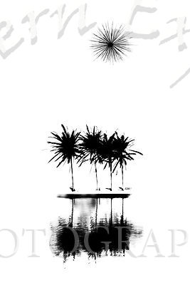 Palms_Trees_and_Star_Fireworks_B_W_inv
