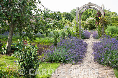 A gravel and stone set path edged with Nepeta 'Six Hills Giant' runs through the centre of the potager garden with timber arc...
