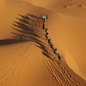 Camel Train on Sand Dunes Erg Chebbi, Morocco