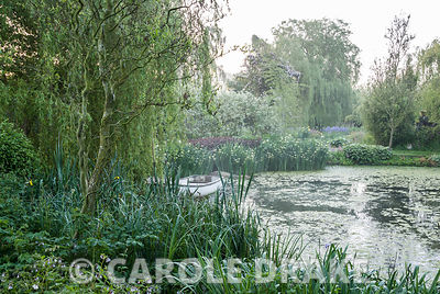 Lake edged with hostas and primulas contains small rowing boat below a weeping willow tree. Westonbury Mill Water Garden, Pem...