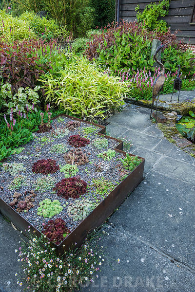 The Carpet Garden includes raised beds edged with rusted steel planted with sempervivums in reds and greens, and surrounded b...