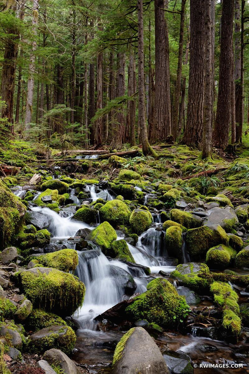 MOSSY ROCKS FOREST STREAM SOL DUC FALLS TRAIL OLYMPIC NATIONAL PARK WASHINGTON PACIFIC NORTHWEST FOREST VERTICAL COLOR