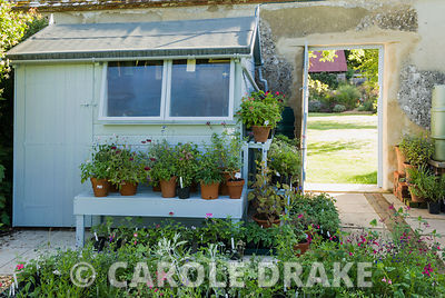 Blue potting shed where Gillian propagates the plants she loves, especially pelargoniums and salvias. Broughton Buildings, Br...