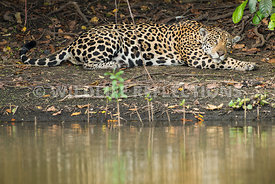 jaguar_bank_rest-38-Edit