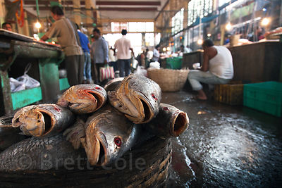 Unidentiied fish for sale at the indoor fish market, Newmarket, Kolkata, India.