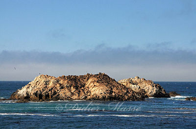 Le rocher aux otaries 1 Pebble Beach Californie 10/12