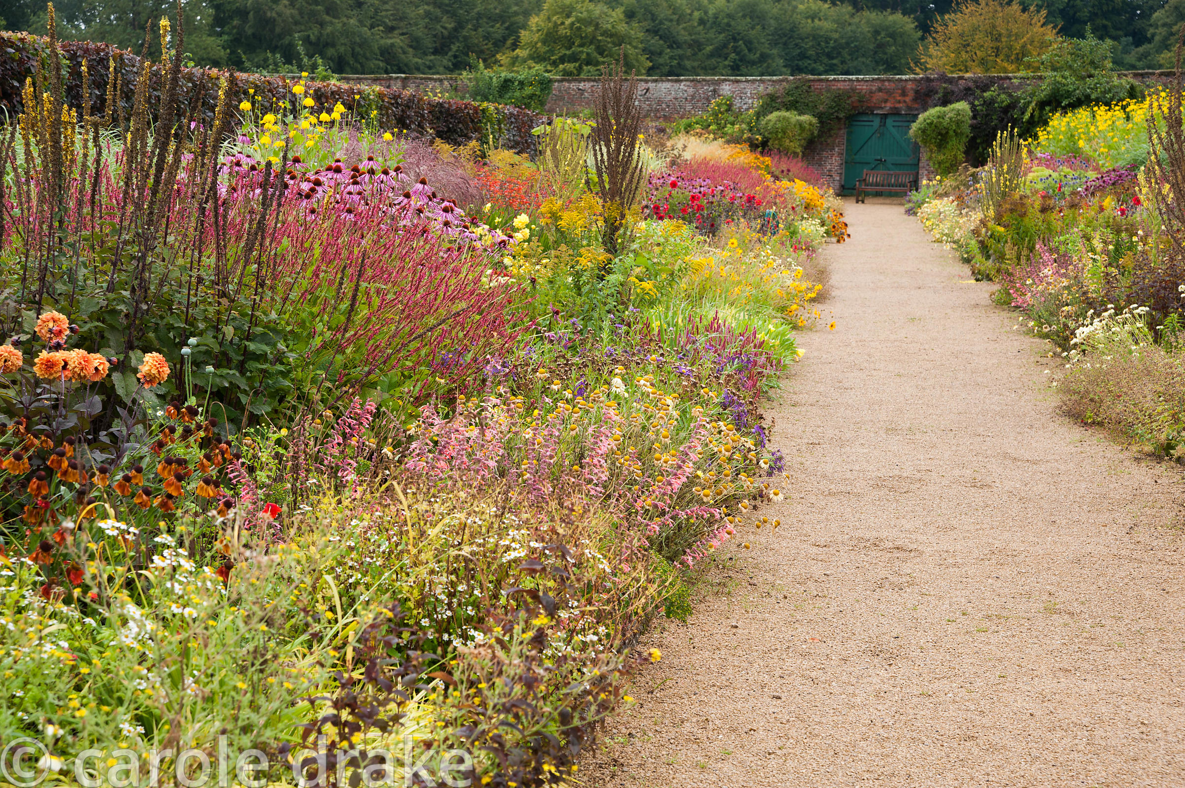 Double herbaceous borders planted with predominantly hot colours including Coreopsis 'Astolat', crocosmias, dahlias, Persicar...