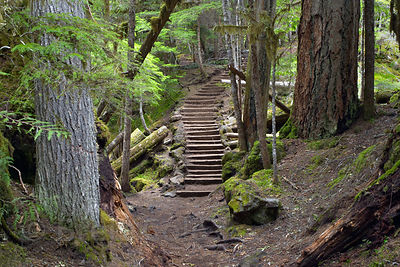 Rustic forest path along the wild and scenic McKenzie River, near Sahalie Falls, Oregon Cascades.