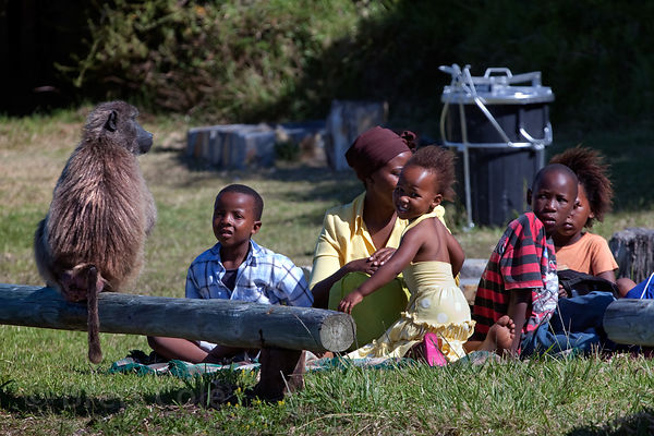 A family sits and watches baboons from the Buffels Bay troop at Buffels Bay, Cape Peninsula, South Africa