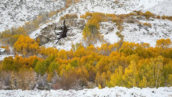 Wide Shot: White Snow, Golden Trees, & A Distant Waterfall