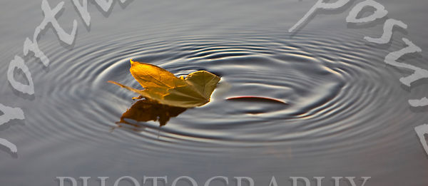 Leaf_Floating_with_Ripples