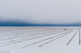 """Snow outside Wall, Texas - 76904"" (2013)"