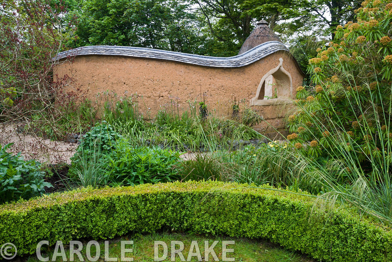View towards Pond Garden surrounded by cob wall, topped with tiles and thatch, across box hedging, past Stipa gigantea, Cotin...