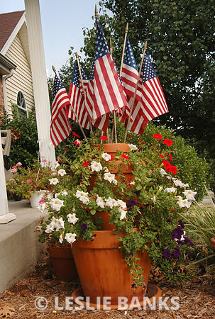 Fourth of July Flowers