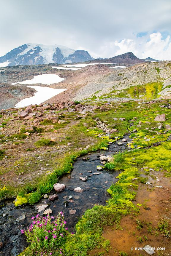 ALPINE CREEK SUMMER WILDFLOWERS MOUNT RAINIER NATIONAL PARK WASHINGTON COLOR VERTICAL