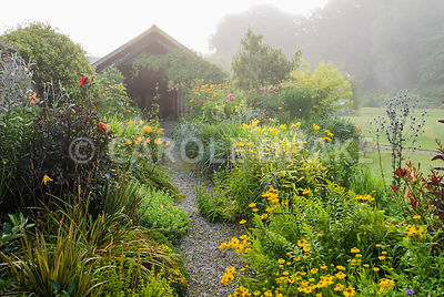 Path framed with borders full of yellows and reds including Helenium 'Butterpat', delicate yellow daisy Madia elegans, dahlia...