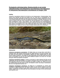 Ambystoma macrodactylum - keeping and breeding (dutch)