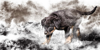 Art-Digital-Alain-Thimmesch-Chien-65