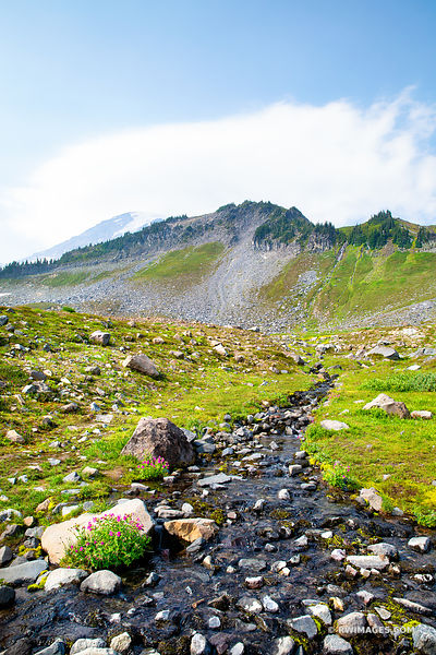 ALPINE CREEK MOUNT RAINIER NATIONAL PARK WASHINGTON COLOR VERTICAL