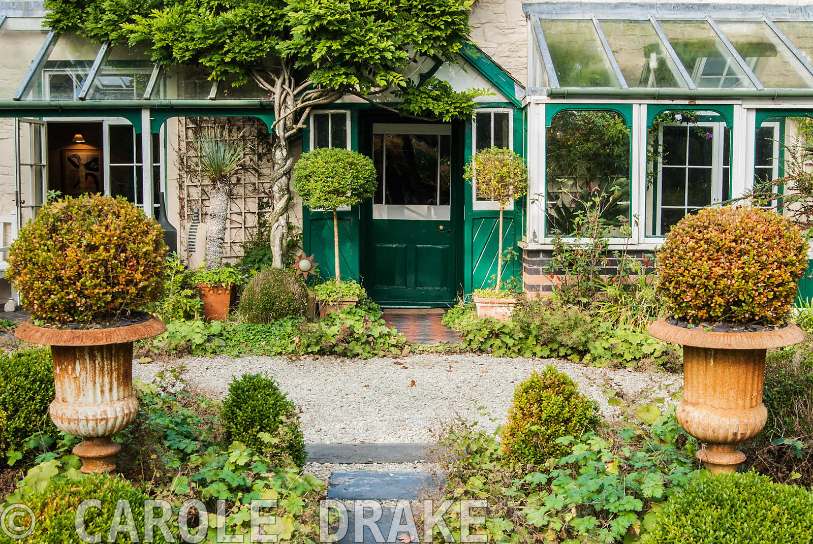 Clipped box frames the front door of the house, surrounded by self seeded Alchemilla molllis. The Cors, Laugharne, Camarthens...