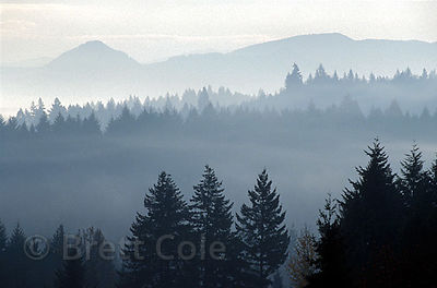 A misty Winter morning reveals the ridgelines in the forests around Eugene, Oregon.