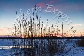 winter grasses with sunset