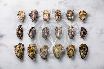 Assorted fresh Oysters on light background