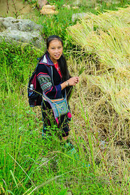 Hmong Woman in Rice Paddy