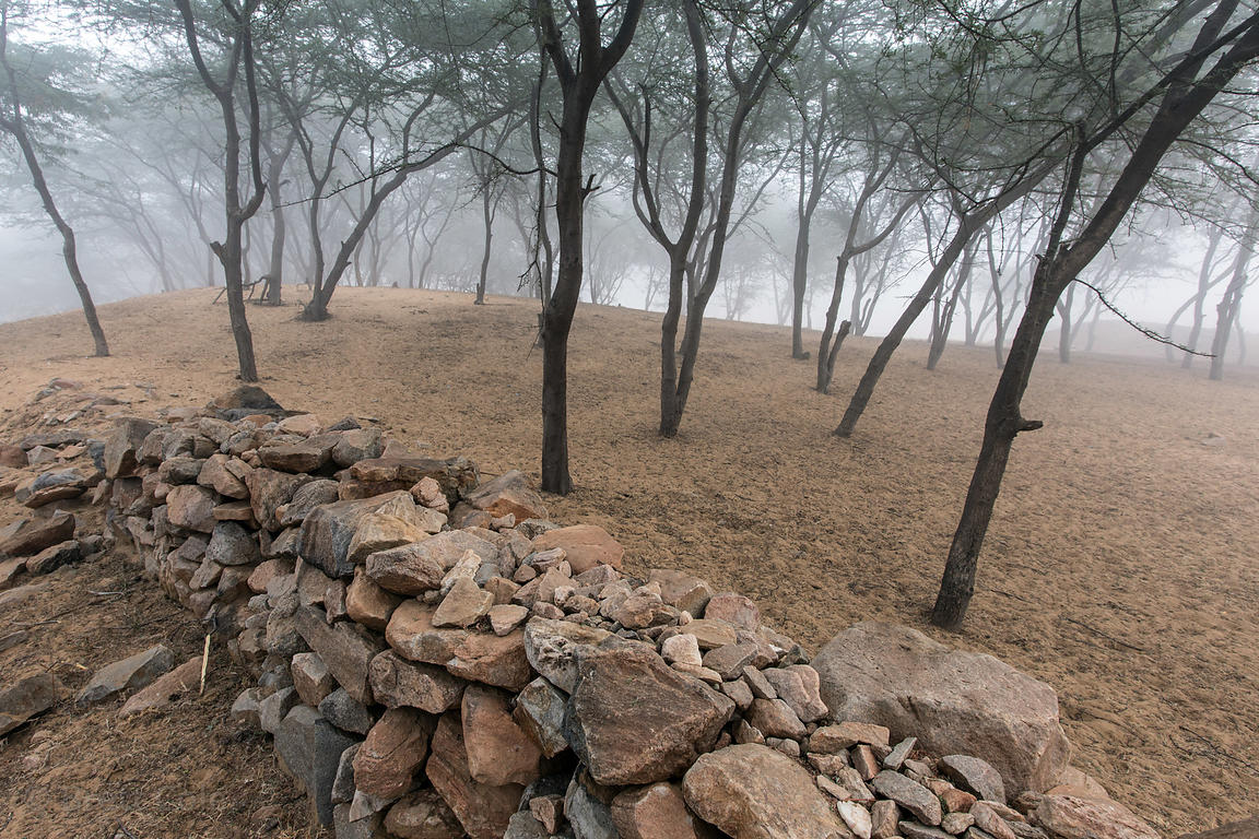 Early morning fog in desert woodlands near Savitri temple, Pushkar, Rajasthan, India
