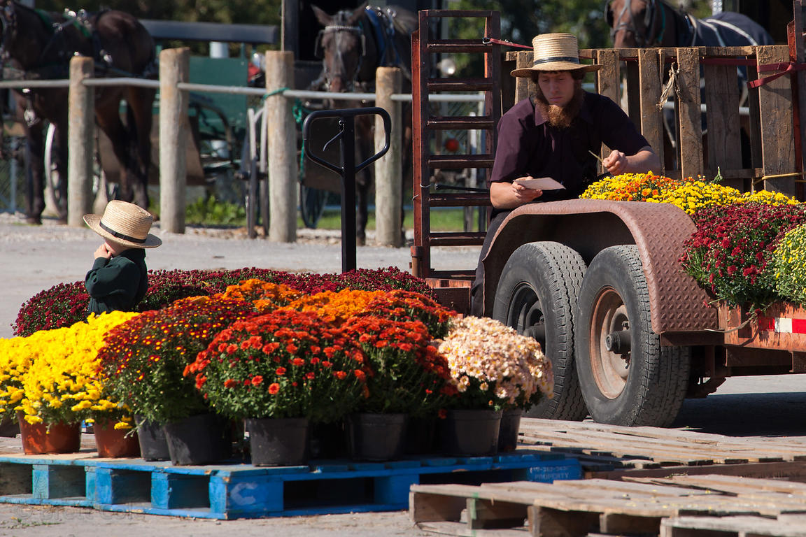 Flowers for sale at a wholesale market in Amish country, Lancaster, Pennsylvania