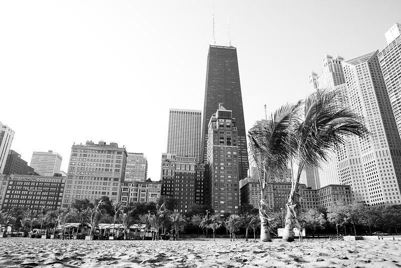 PALM TREES ON OAK STREET BEACH GOLD COAST CHICAGO BLACK AND WHITE