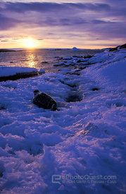 Weddell Seal by Coast at Sunset