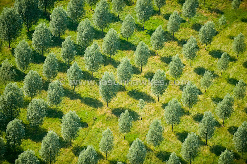 Aerial view of pattern over trees