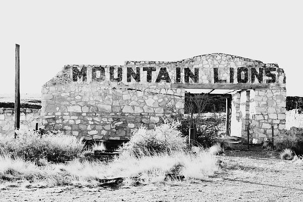 MOUNTAIN LIONS ROUTE 66 ARIZONA BLACK AND WHITE