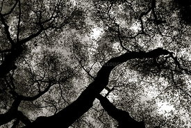 tree_looking_up