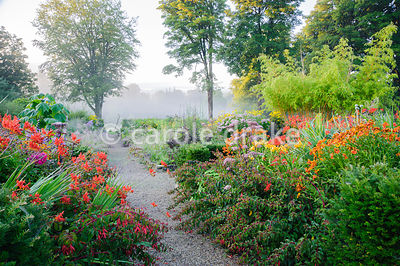 A stone edged path leads towards the mist shrouded field below the garden past planting including  fuchsias, Crocosmia 'Lucif...