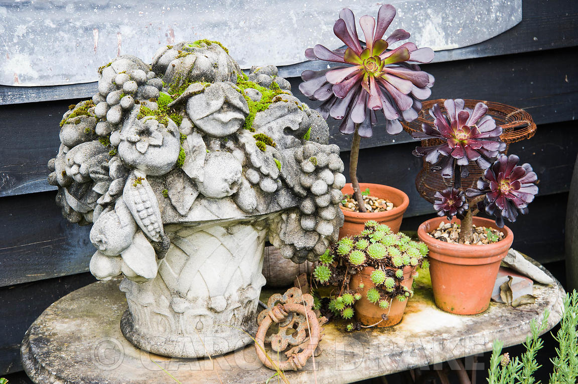 A decorative arrangement of plants, containers and objects against black weatherboarding including Aeonium 'Zwartkop' and a s...