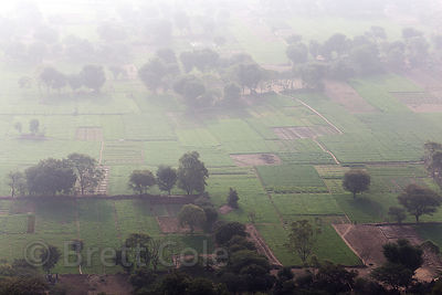 Elevated view of wheat fields near Honkra village, from the Bedhnath temple area, Rajasthan, India