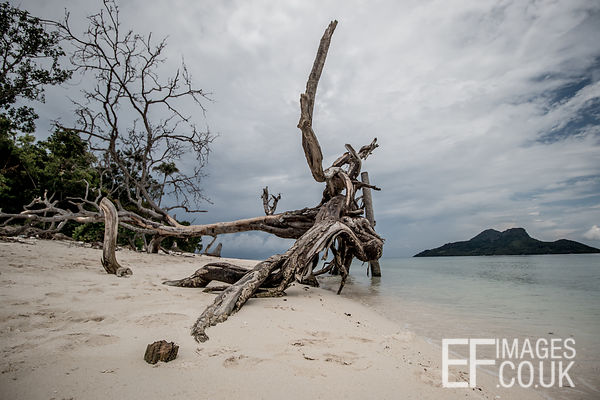 Washed Up Tree Trunk On the Beach At Mantabuan Island
