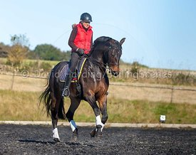 Dressage on the Cotswolds, 20161011216