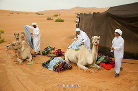 Camel handlers getting ready for camel saddles at Empty Quarter.